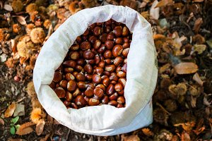 Bag of freshly picked chestnuts