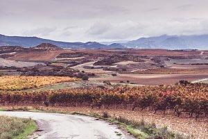 Vineyard landscape in Spain