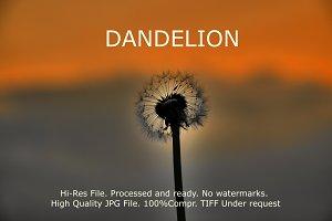 Dandelion Sunset landscape v3