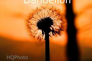 Dandelion Sunset landscape v2