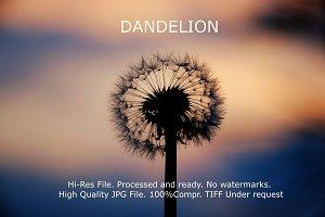 Dandelion Sunset landscape v4