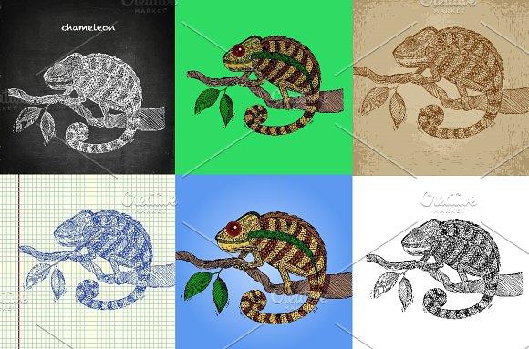 Chameleon Hand Drawn Set