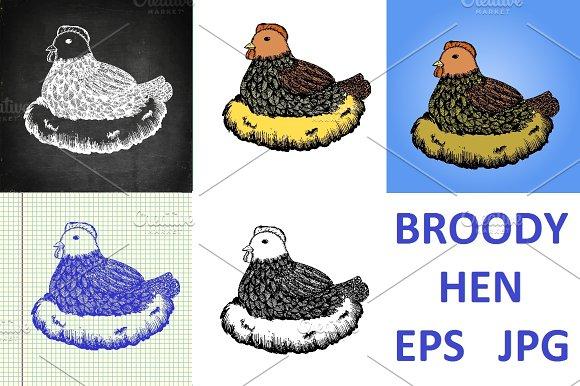 Broody Hen In Nest