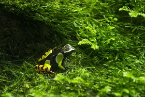 Green, Black, and Yellow Frog