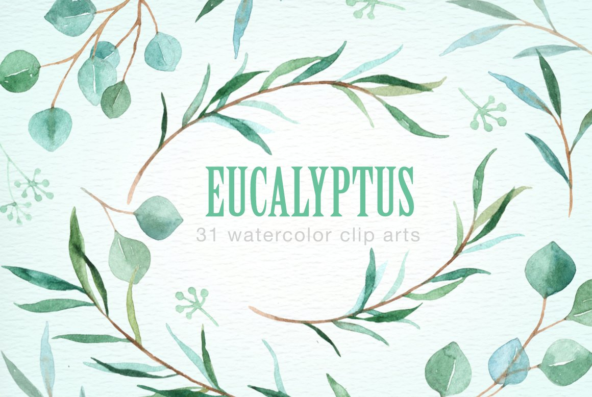Eucalyptus Leaf Watercolor Clipart Illustrations