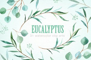 Eucalyptus Leaf Watercolor clipart