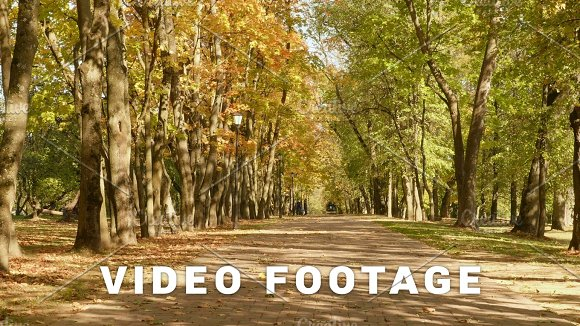 Road In The Park Autumn Daytime Smooth Dolly Shot