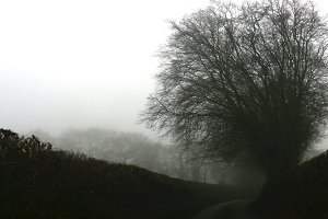 Dense Fog Country Road and Tree