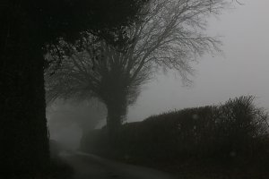 Winding Country Road on Foggy Day