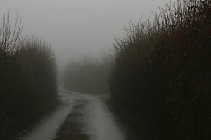 Winding foggy country road