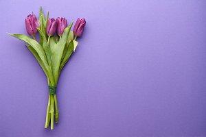 Purple tulips on purple background