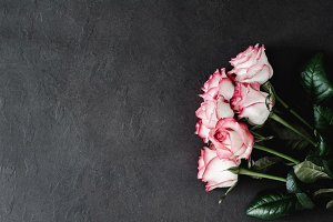 Stylish dark background with roses