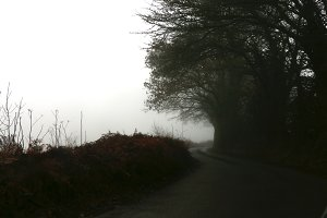 Foggy Country Road with Trees