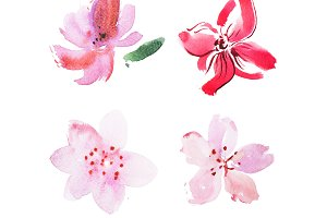 Watercolor drawing of fresh garden flowers aquarelle painting.
