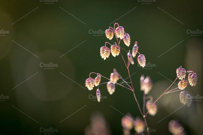 Glowing... - Nature
