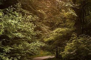 Forest walk...