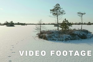 Snowy island of trees in park. Clean and frosty daytime. Smooth dolly shot