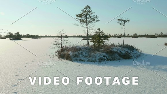 Snowy Island Of Trees In Park Clean And Frosty Daytime Smooth Dolly Shot
