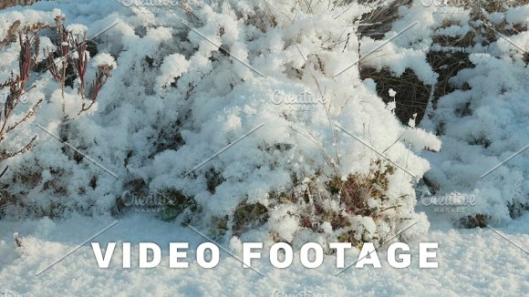 Dried Flowers Under The Snow Clean And Frosty Daytime Smooth Dolly Shot