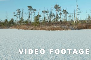 Winter forest on the frozen lake. Clean and frosty daytime. Smooth dolly shot