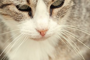 Beautiful tabby cat portrait
