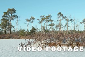 Island of the dried grass. Clean and frosty daytime. Smooth dolly shot