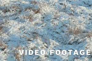 Dried flower under the snow. Clean and frosty daytime. Smooth dolly shot