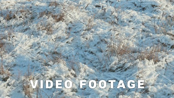 Dried Flower Under The Snow Clean And Frosty Daytime Smooth Dolly Shot