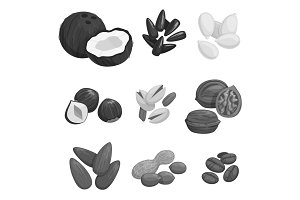 Nuts, grain and nut seeds vector icons