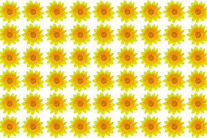 Seamless yellow flower background