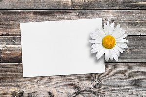Greeting card and chamomile flower