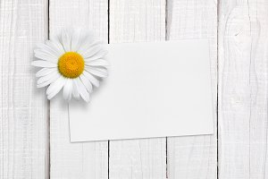 Blank greeting card and chamomile