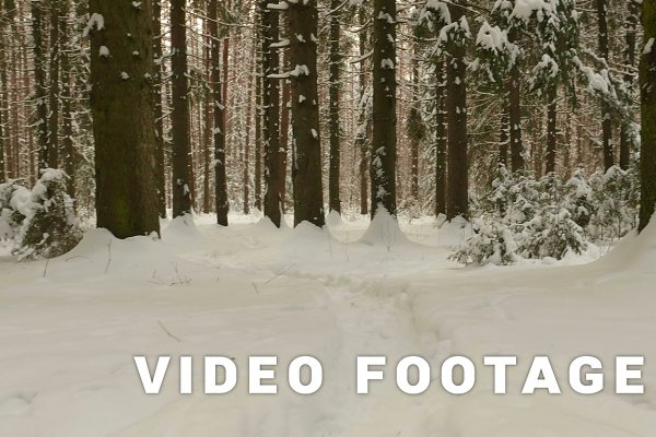 Flying in winter forest. Clean and…