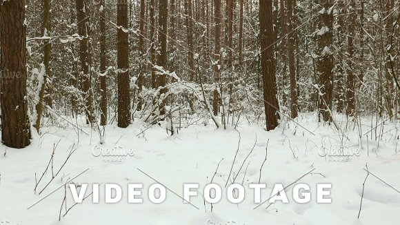 Up To The Trees Clean And Frosty Daytime Used Professional Gimbal Stabilazer