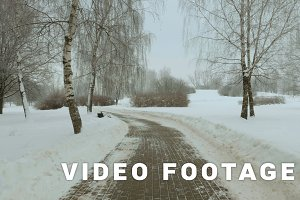 Walking in the winter park. Frosty daytime. Used professional gimbal stabilazer