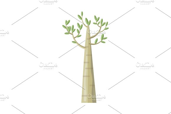 Poplar Tree With Green Leaves
