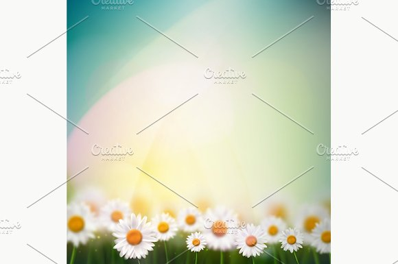 Natural Background With Camomiles