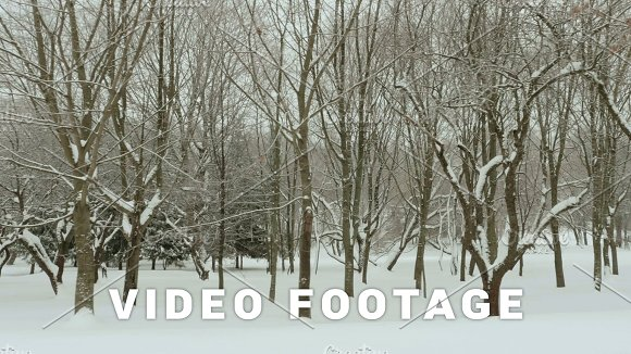 Winter Park Clean And Frosty Daytime Used Professional Gimbal Stabilazer