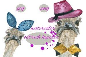 ostrich hipster
