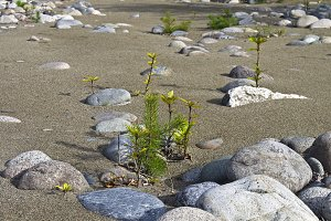 Shoots of trees on the shore.