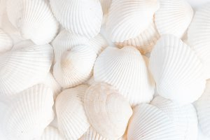 White shells, closeup