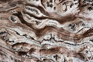 Texture of old dry tree
