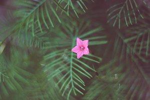 Cypress Fern Flower