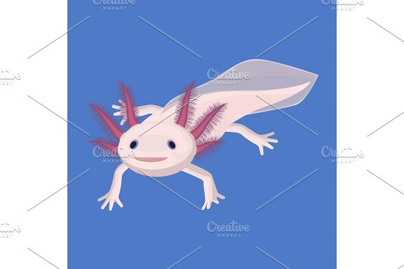 Axolotl Pink Isolated With Four Legs On White Water Animal