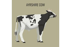 Ayrshire cows isolated on white. Vector illustration of dairy cattle