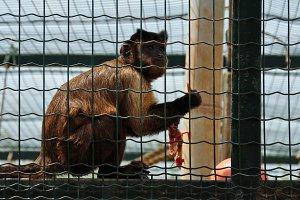 Monkey Eating Bird