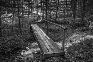 Bridge / Forest