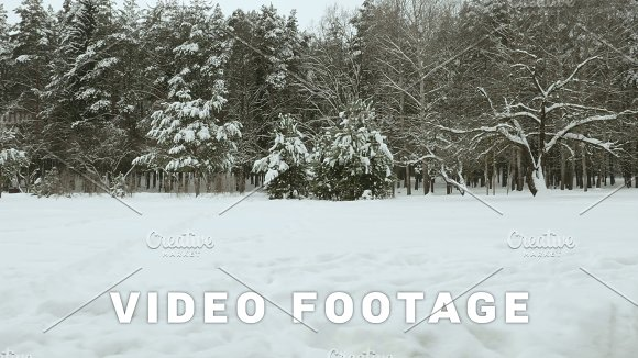 Trees Under The Snow In Winter Forest Used Professional Gimbal Stabilazer