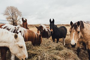 Horses on ranch in Colorado