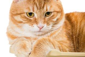Cat lies in a plastic box